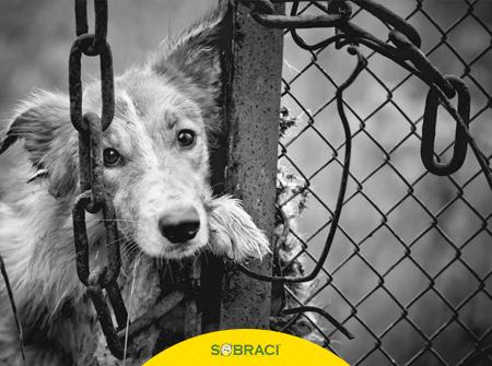 Crimes contra animais podem ser denunciados