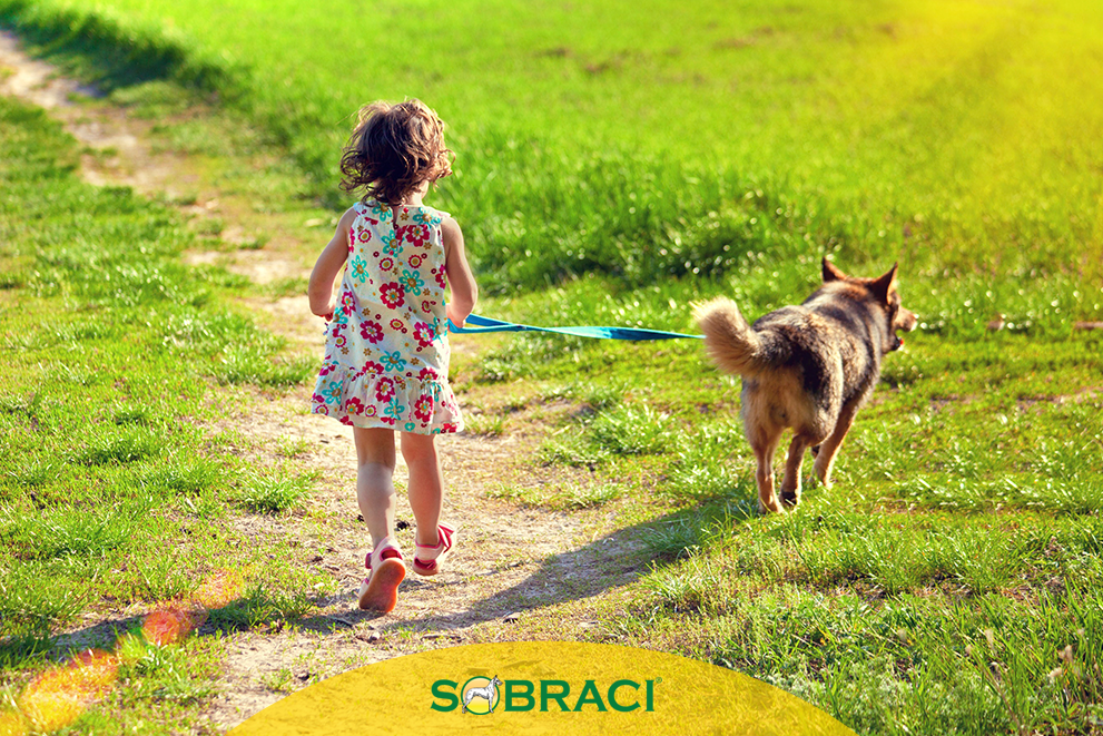 6 Razões para correr com seu cão