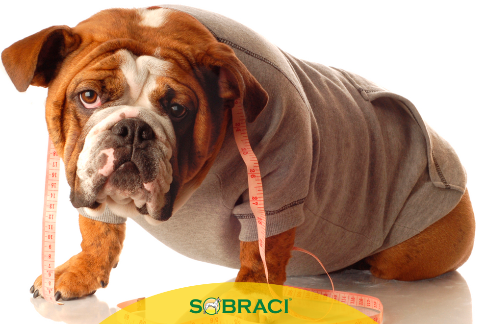Como ajudar seu cão que está acima do peso?