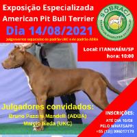 Exposição Especializada American Pit Bull Terrier