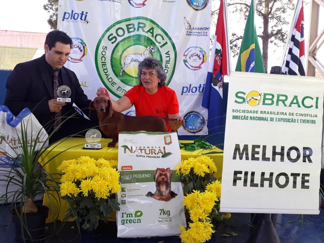 Exposição Panamericana e Copa São Paulo- Núcleo Campinas