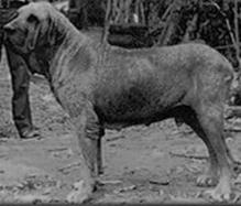 Original Fila Brasileiro